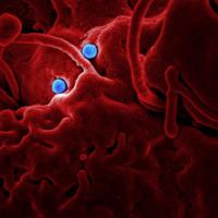 Disease spread prediction platform